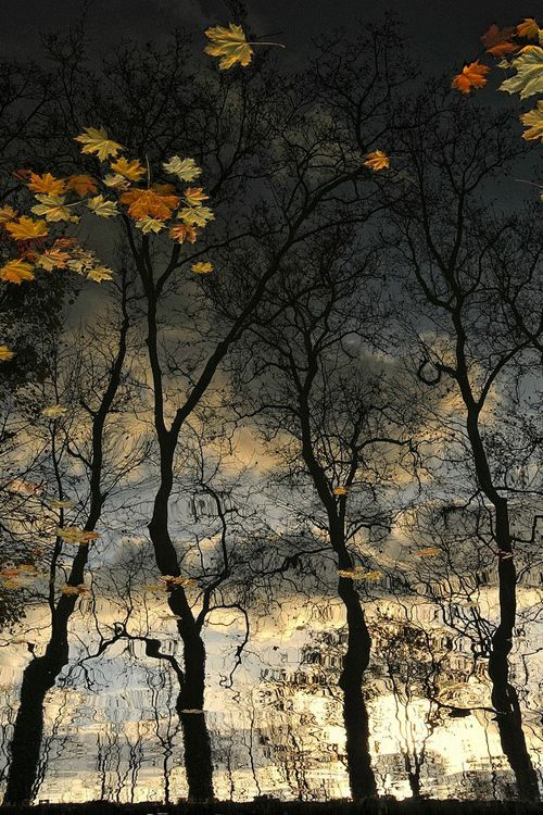 Reflection of Bare Trees with Colourful Leaves Floating in the Rain Puddle   ~~ biancamariaxx:  Reflets D'Automne by Pascale Albrand