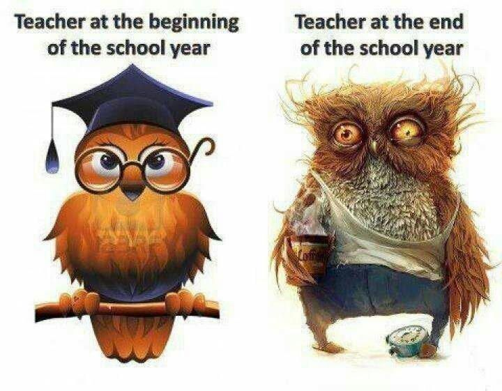 Owl Teacher Before And After Profesores Divertidos Escuela