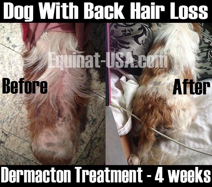 Dermacton Reviews Dog Skin Allergies Shih Tzu Dog Itchy Dog