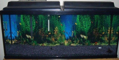 Picture of fish tank with black gravel new 55 gallon for Black fish tank gravel