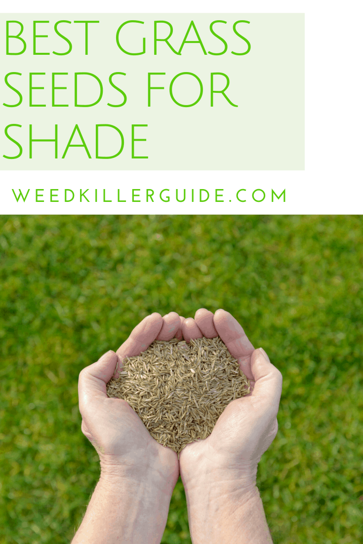 Best Grass Seed For Shade In 2020 Our Reviews And Comparisons Best Grass Seed Grass Seed For Shade Grass Seed