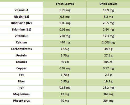 Moringa Health Benefits Buy Moringa Products Hierbas Plantas