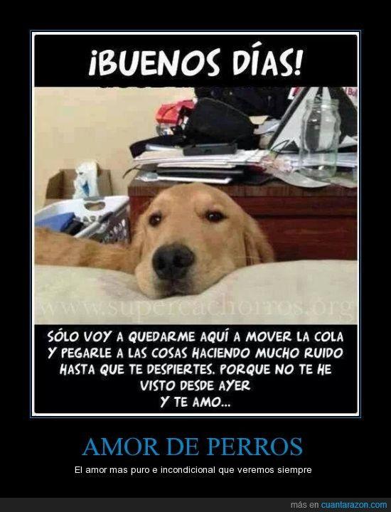 Amor Perruno Amor De Perro Perros Perros Frases
