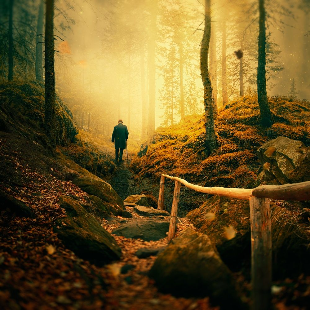 Story of the fairy forest by Caras Ionut