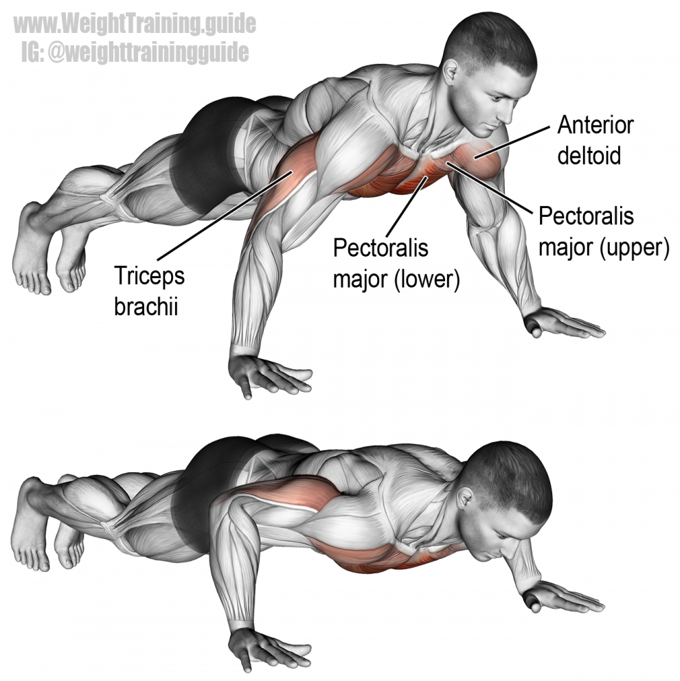 Push-up exercise instructions and videos | Gym Anatomy | Pinterest ...