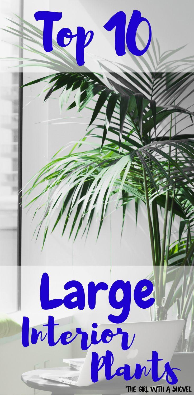 Top 10 Large Indoor Plants Large Indoor Plants Big 400 x 300