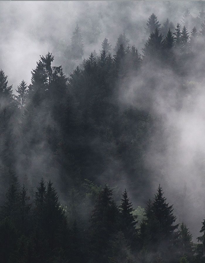 ein wald im nebel tipps zum wandern bei jedem wetter in. Black Bedroom Furniture Sets. Home Design Ideas