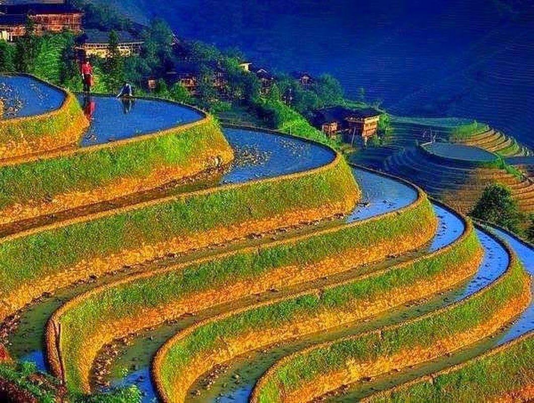 Rice Terraces Terrazas Del Arroz Vietnam Culture