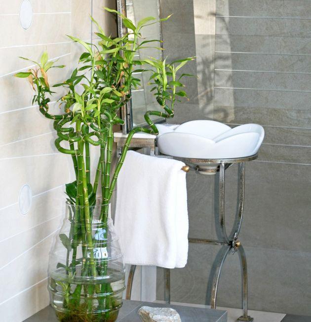 Las mejores plantas para el ba o seg n el feng shui feng - Plantas en el bano ...