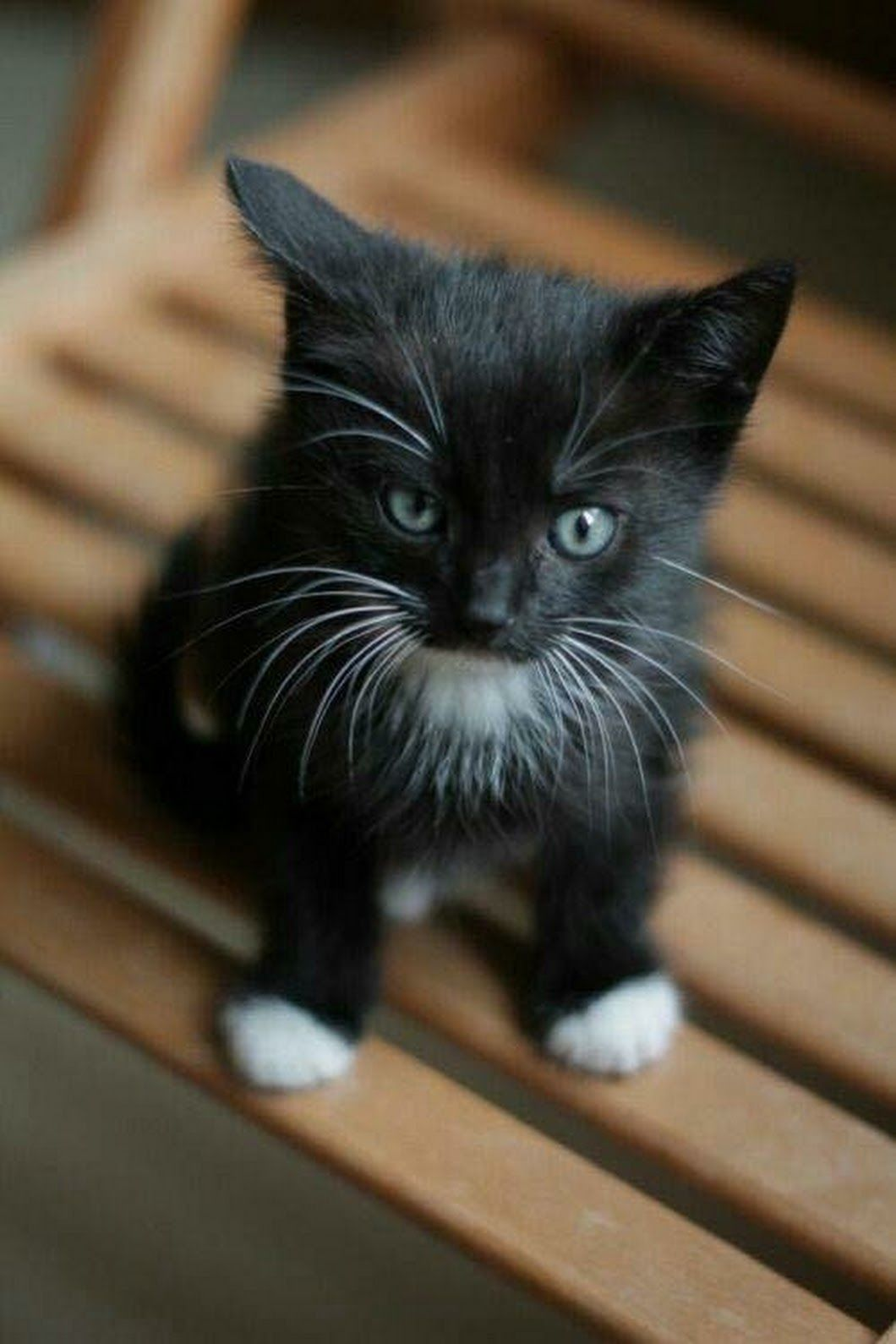 Cute Black And White Kitten Look At That Expression It S Ready For Trouble Baby Cats Pretty Cats Kittens Cutest