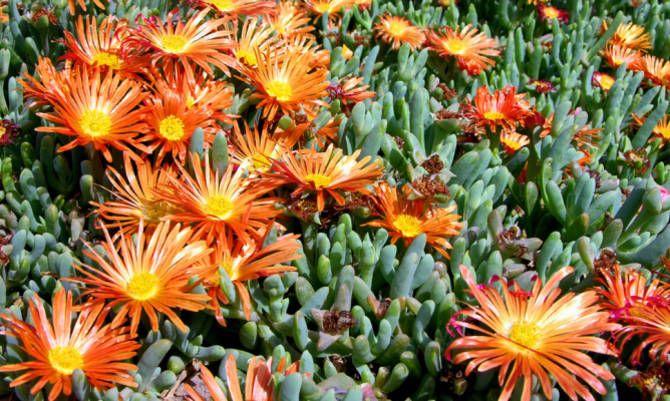 Pianta Fiori Arancioni.Le Piante Grasse Giocano Da Protagoniste Piante Grasse Piante