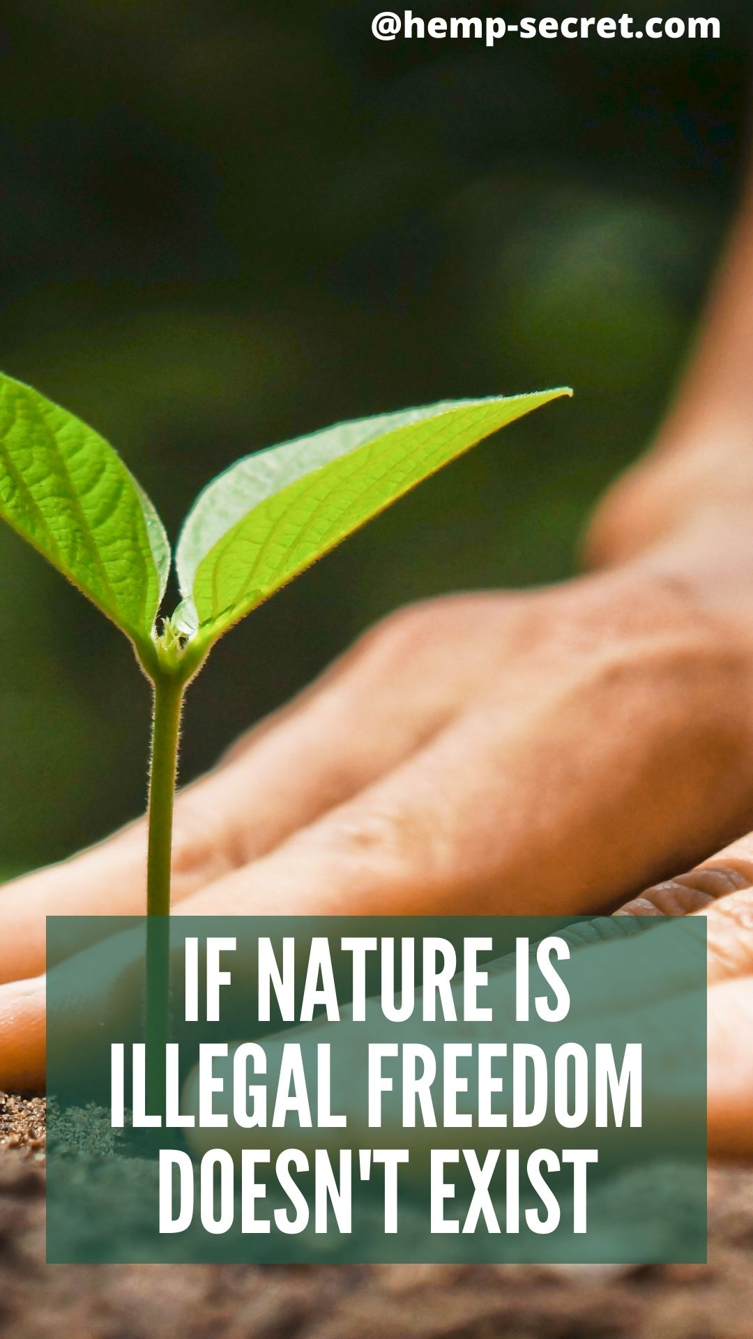 Nature Nature Freedom Herbs