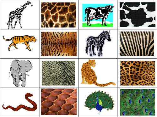 Identify Which Animal Each Of The Skin Patterns Be Teaching Resources Zoo Crafts Animal Crafts Preschool Animal Coverings