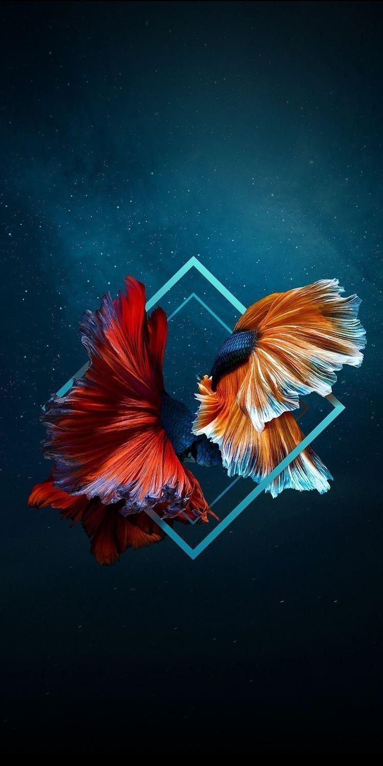 Pin By Sisca Drh On Ikan Cupang Abstract Iphone Wallpaper