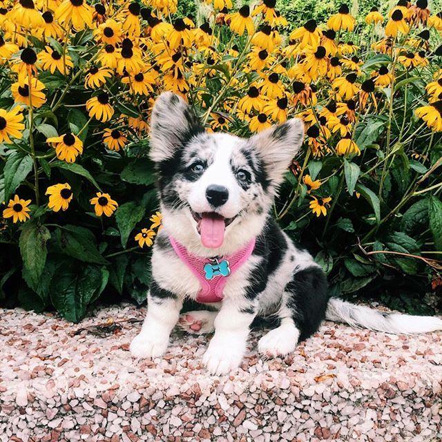Resultado de imagen de happy thursday flowers animals