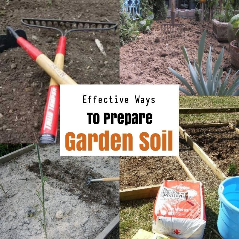 11b364f45cd00e2c30b1883cf7949318 - How To Prepare Soil For Next Year Gardening
