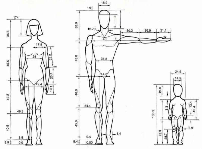 Pin by Kristeel Cazares on Dimensiones | Pinterest | Anatomy, Draw ...