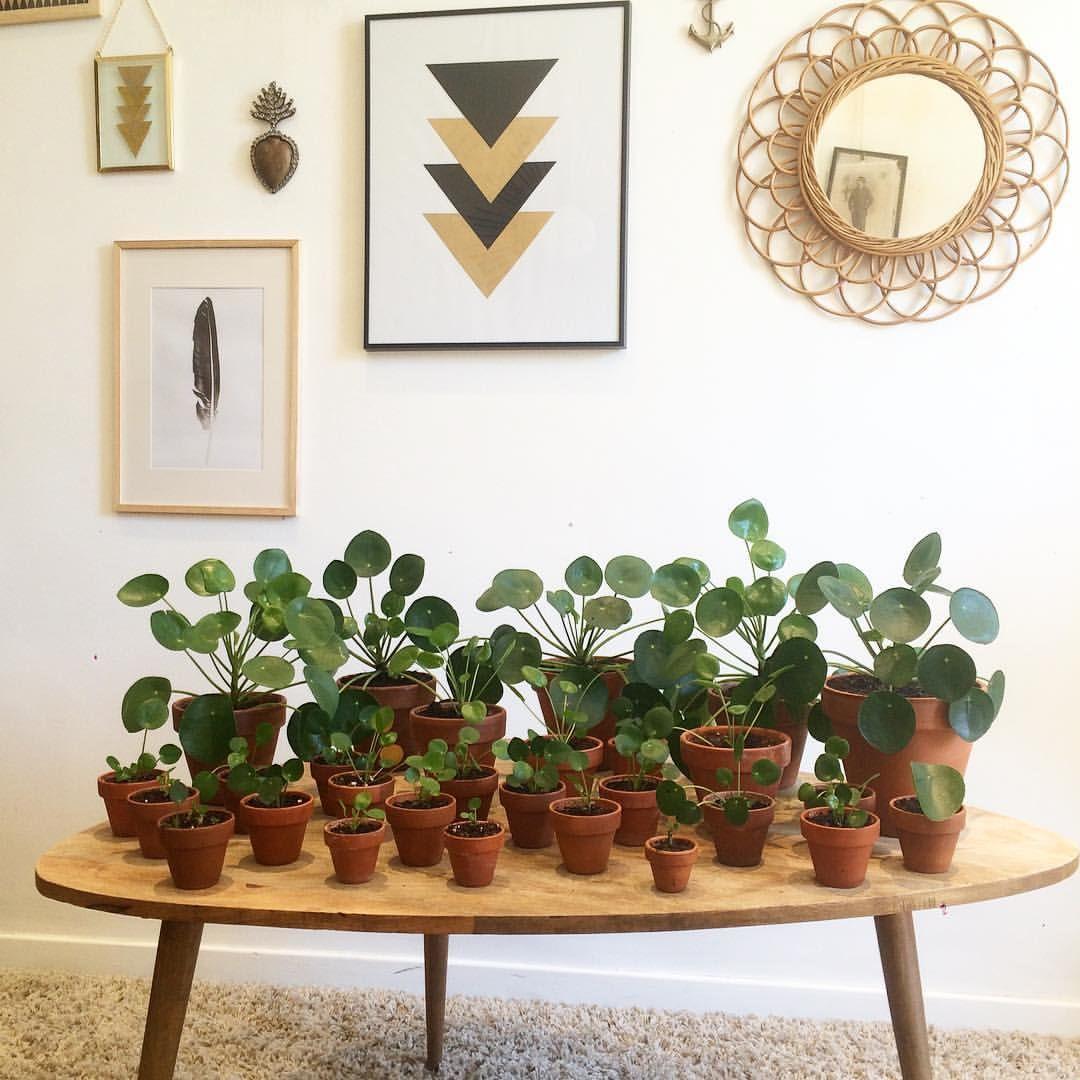 inspiration에 있는 bubulle님의 핀 planter des fleurs plante appartement 및 plante verte