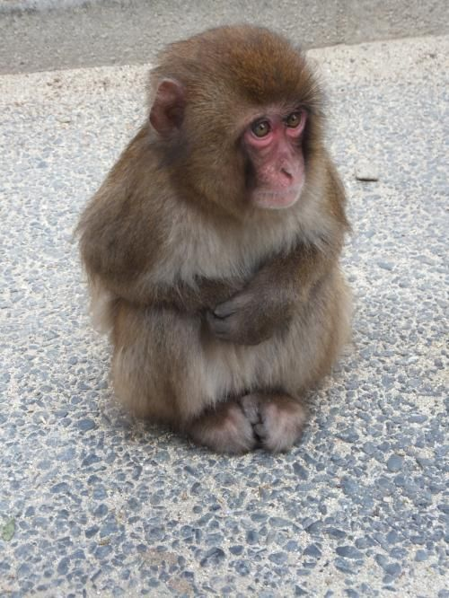 雪の大分 温泉巡り 別府温泉 旅行のクチコミサイト フォートラベル 猿 かわいい 美しい動物 動物 ペット