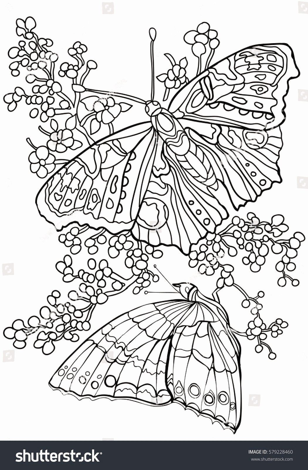 Pin By Kimberly Madrid On Butterflies Butterfly Coloring Page Coloring Book Pages Geometric Coloring Pages [ 1600 x 1050 Pixel ]