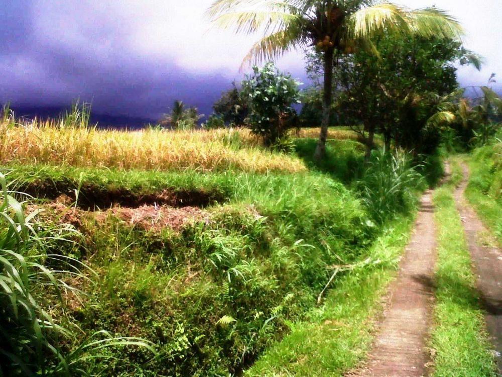 Gambar Sketsa Pemandangan Bali 28 Images Ini Dia Indah