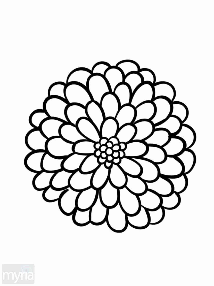 24 Adult Coloring Book Flowers In 2020 Flower Coloring Pages