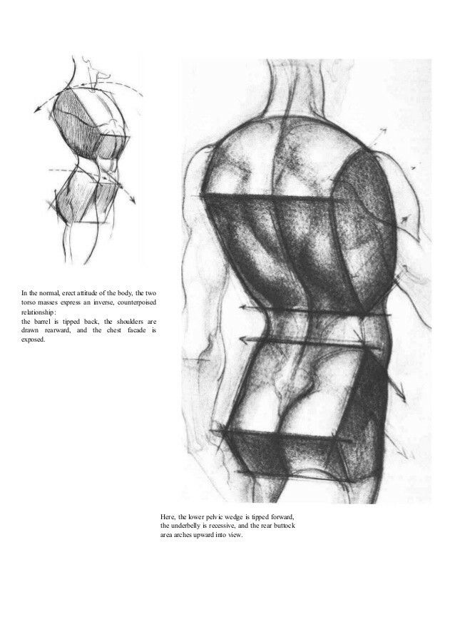 Burne Hogarth: Dynamic Anatomy | Planar Things | Pinterest | Anatomy ...