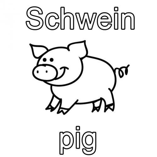 Englisch Lernen Ausmalbild Schwein