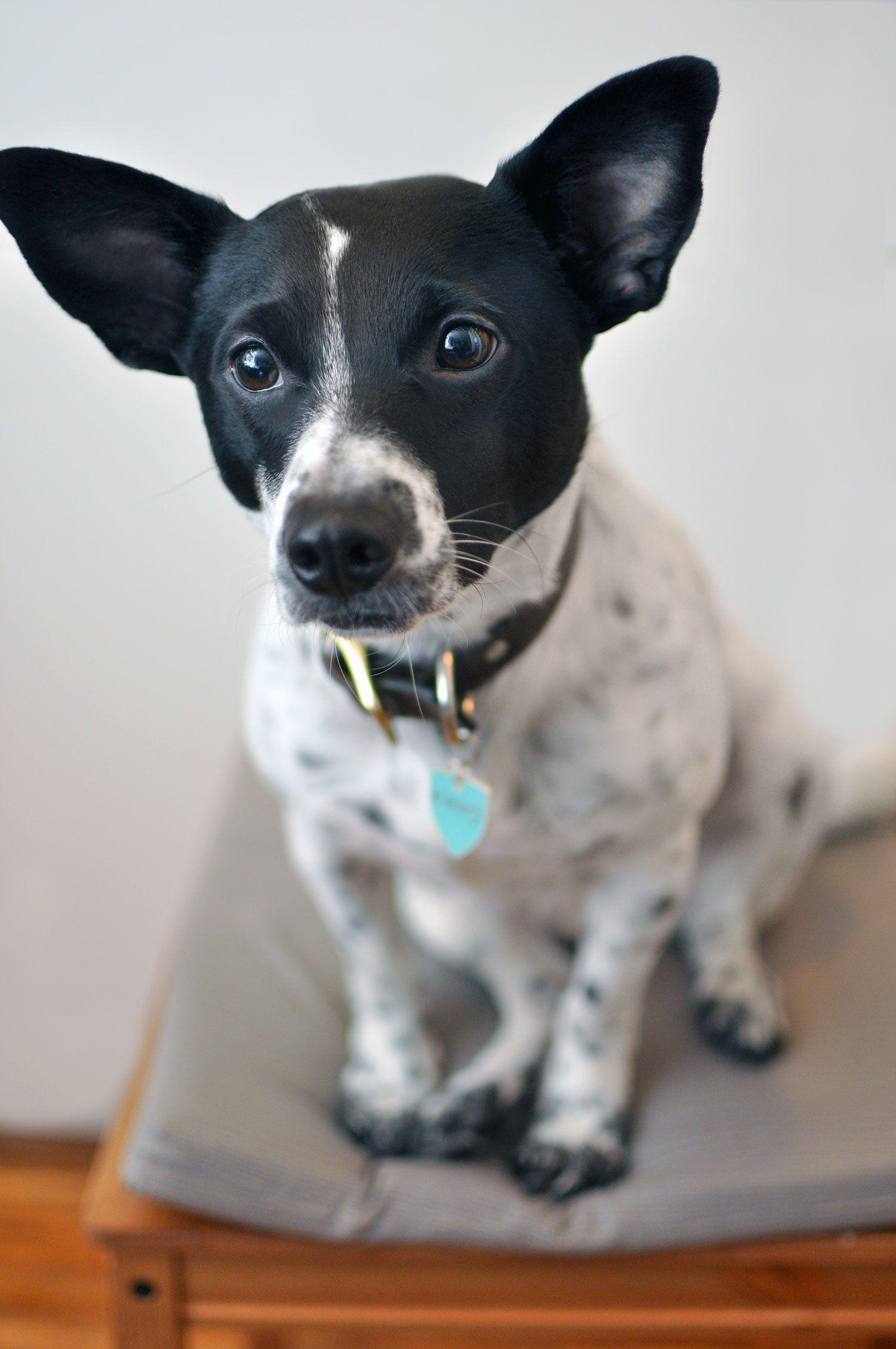 Figo Pet Insurance Our Partnership + Exclusive DISCOUNT