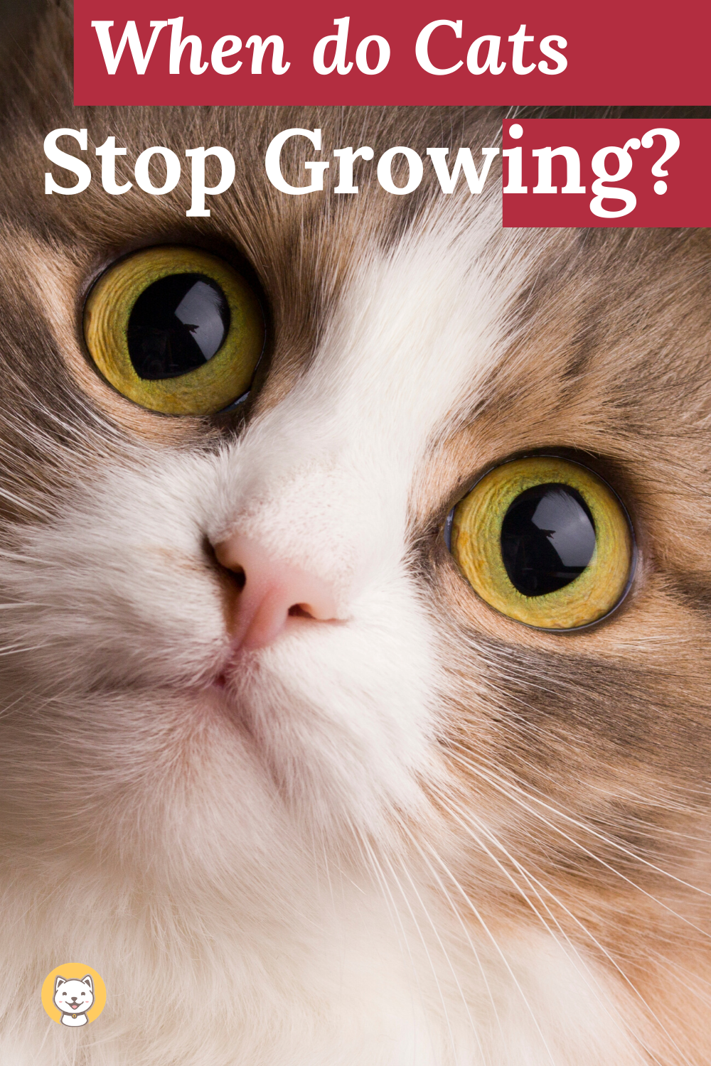When Do Cats Stop Growing Have Yo Ever Wondered Cat Behavior Cats Cat Health