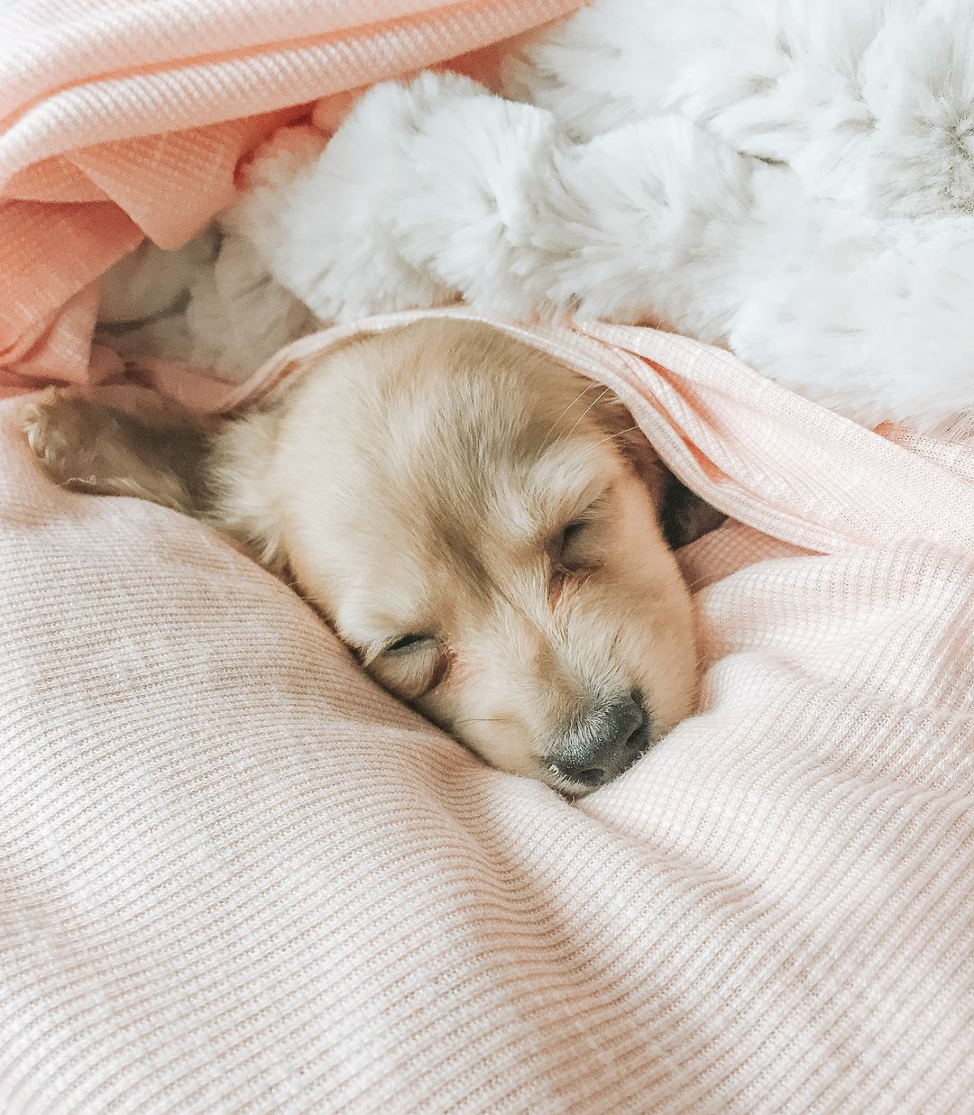 M A Y A The Mini Dachshund On Instagram Have I Melted Your Heart
