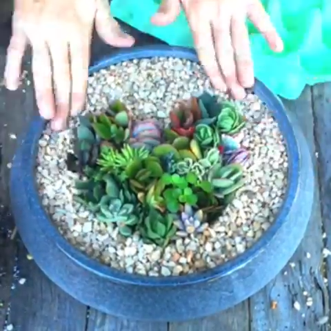 Photo of DIY Heart Succulent Planter ?