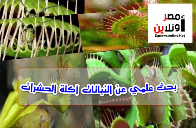 بحث علمي عن النباتات آكلة الحشرات Plants