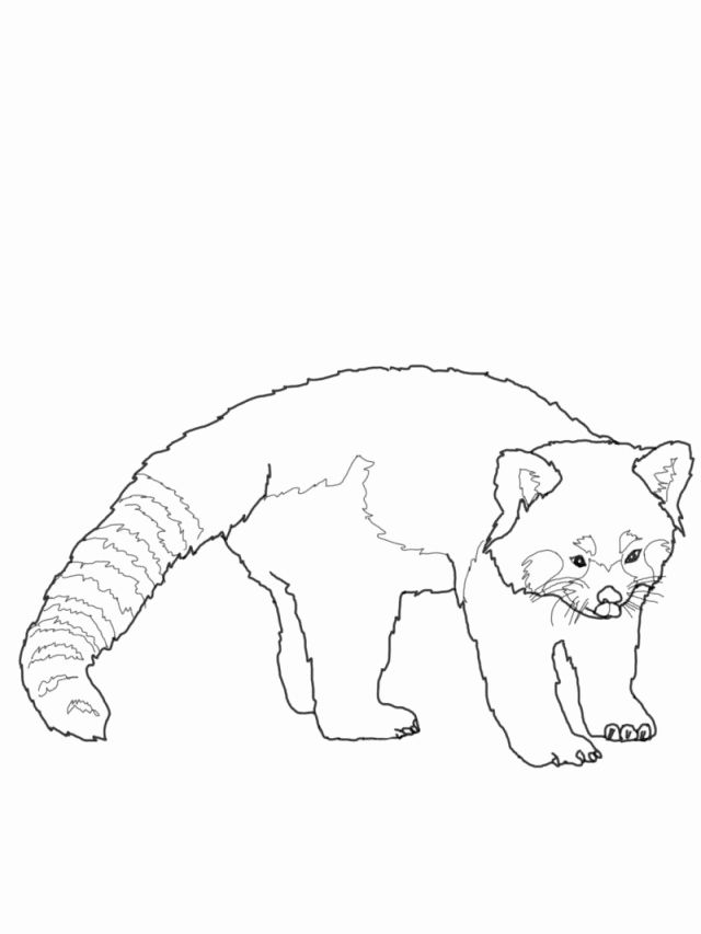 Baby Red Panda Coloring Page Colorir