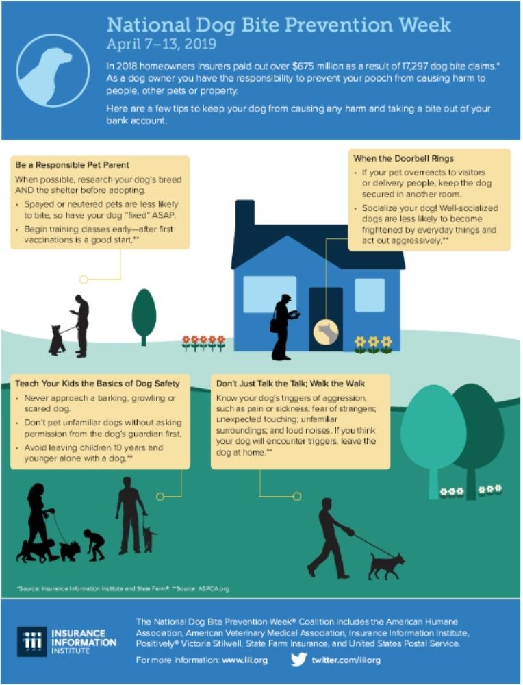 National Dog Bite Prevention Week Dog Biting Dog Bite