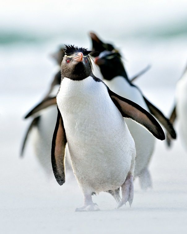 le monde des pingouins(Ross Konigsburg)