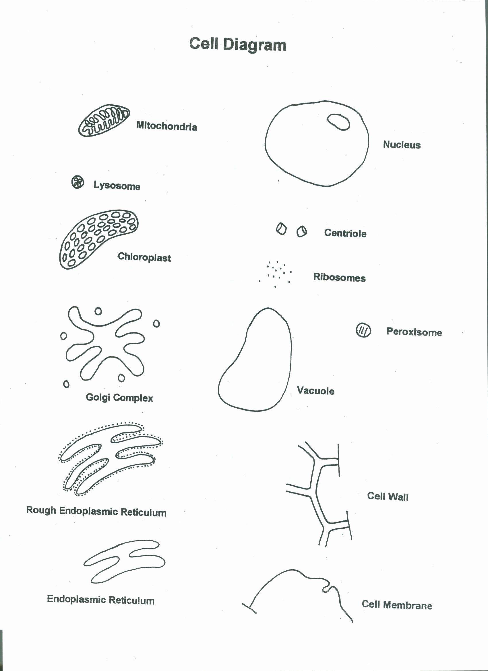 Cells Alive Worksheet Answer Key Fresh Cells Alive Plant