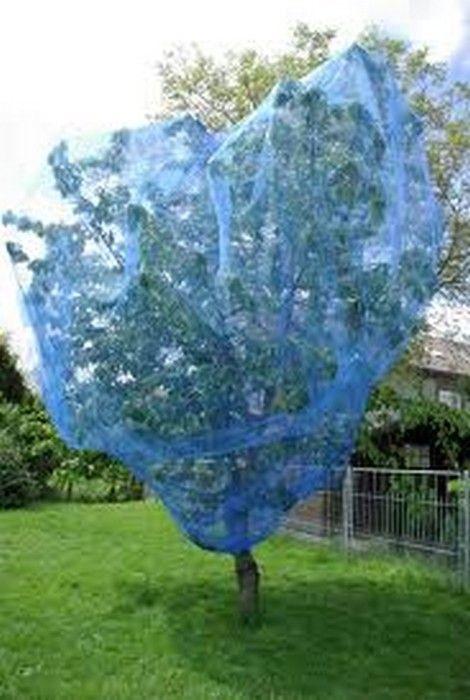 Filet anti oiseaux de couleur bleue id al pour la protection des fruits du verger cerises - Comment faire fuir les oiseaux des cerisiers ...