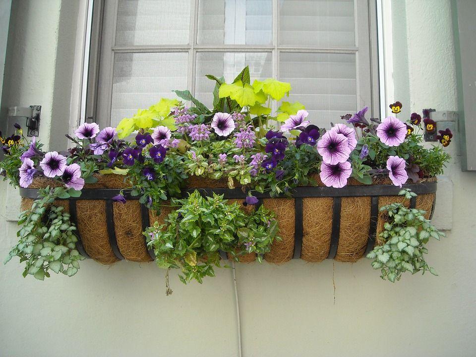 Fioriere Per Fiori ~ Fiori e piante da balcone per chi ha il pollice nero garden city