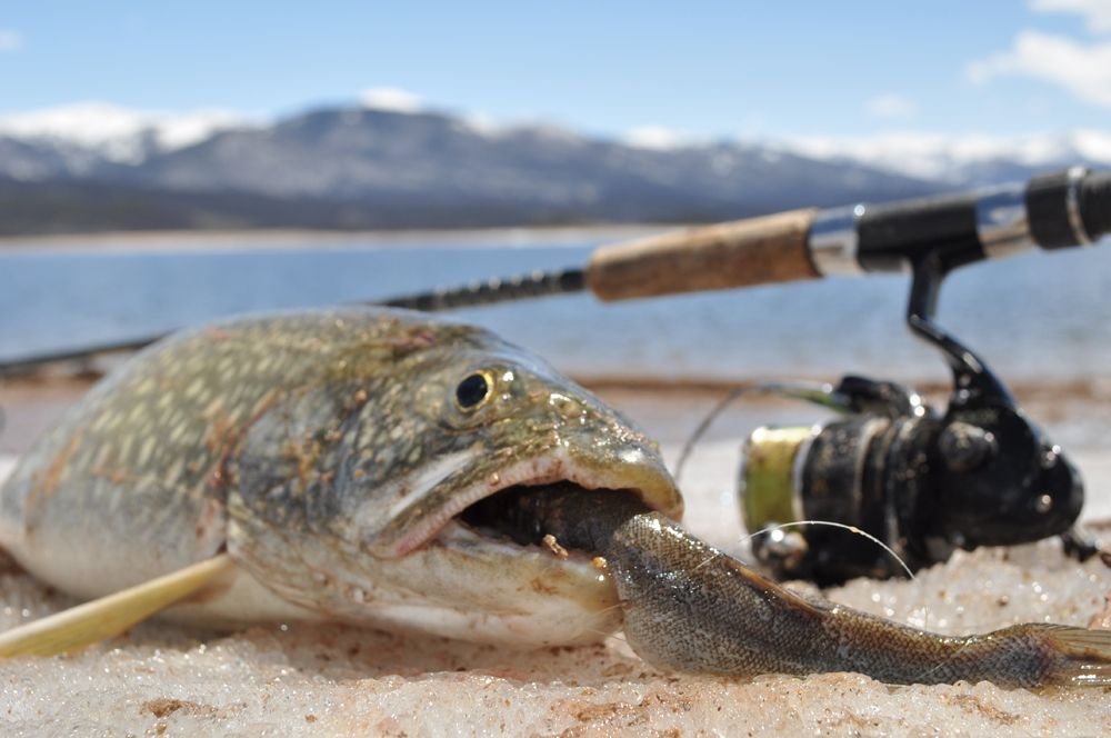 trout fishing bait ideas | #fishingbaitarticles #fishing, Fly Fishing Bait
