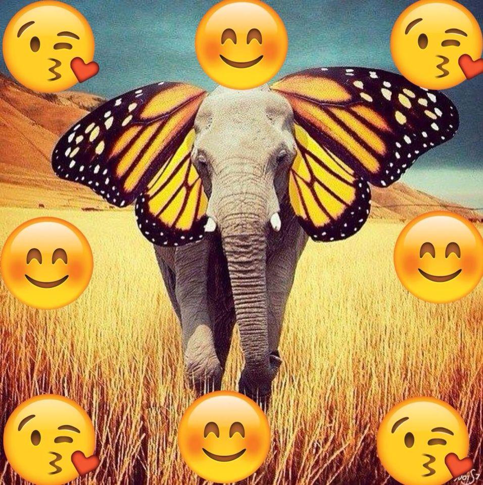 My elephant friend warrior pinterest