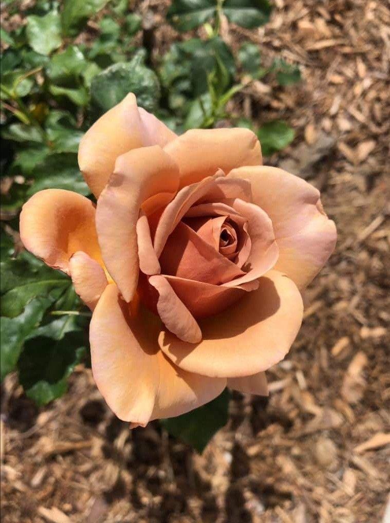 Pin Von Weissundschwarz Auf Rosen Pflanzen Pflanzkubel Und Blumen