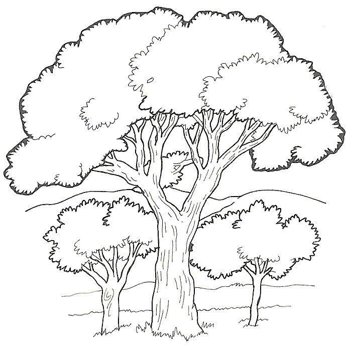 rboles  CNaturales  Pinterest  Colorear Dibujos para pintar