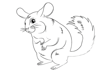 آموزش گام به گام نقاشی حیوانات سنجاب چینچیلا Disney Characters Character Fictional Characters