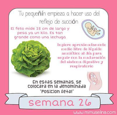Semana 26 Embarazo Tamaño Y Evolución Del Bebé Mimuselina Embarazo 26 Semanas De Embarazo Embarazo Y Parto
