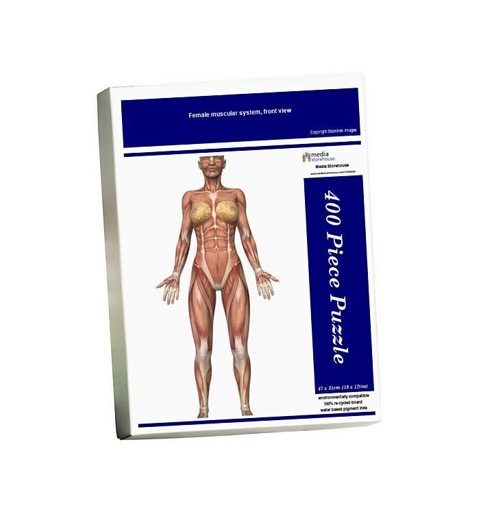 26+ Female muscular system, front view. 400 Piece Puzzle. Female muscular system, front view.