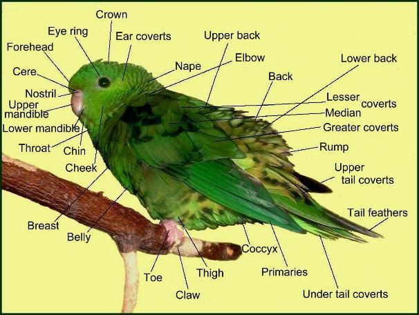 плетение строение попугая фото несомненный актерский талант