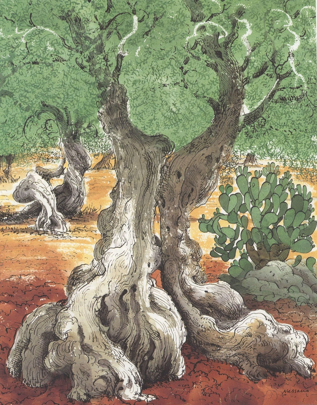 Olive Tree Art Aquarelle Et Dessin