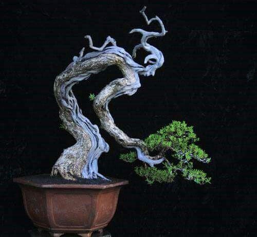 Anthropomorphic bonsai