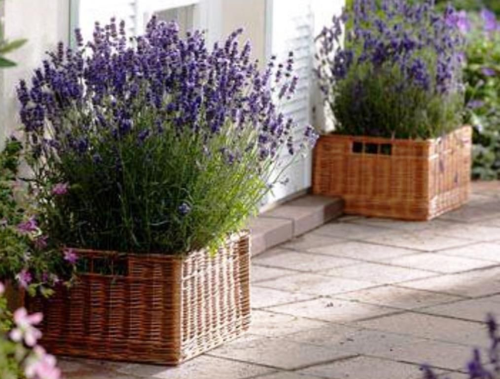 Charming Lavender Planters To Welcome You Lavender Planters Garden Containers Outdoor Gardens